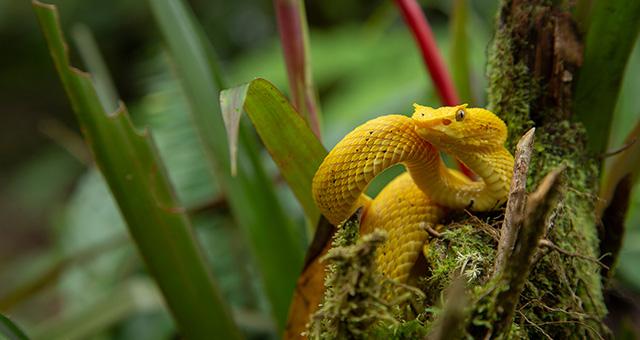 『世界大自然紀行:中央アメリカ』